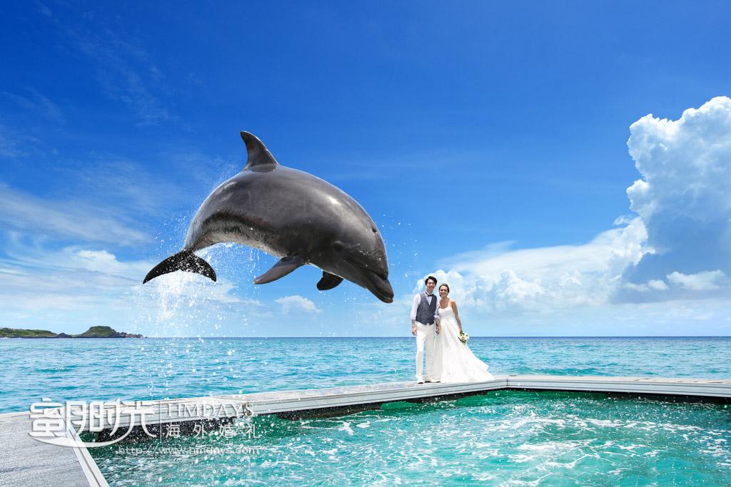 海豚是这个就弹的特色之一 冲绳丽贝拉(海之心)教堂婚礼