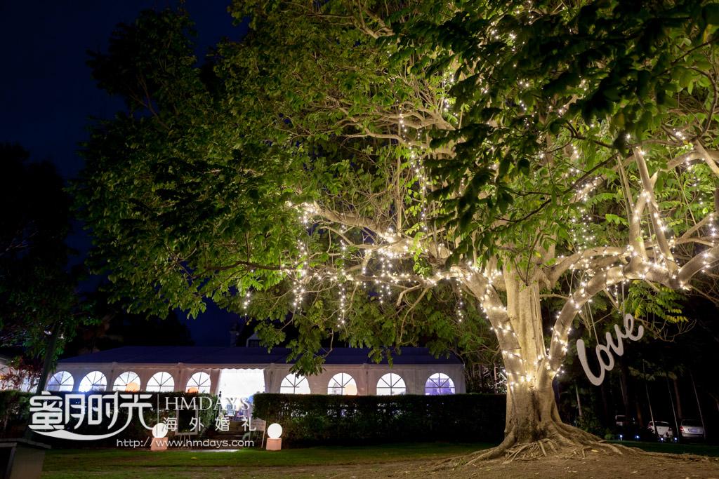 精心装扮过后的大树 摄影师客片效果展示