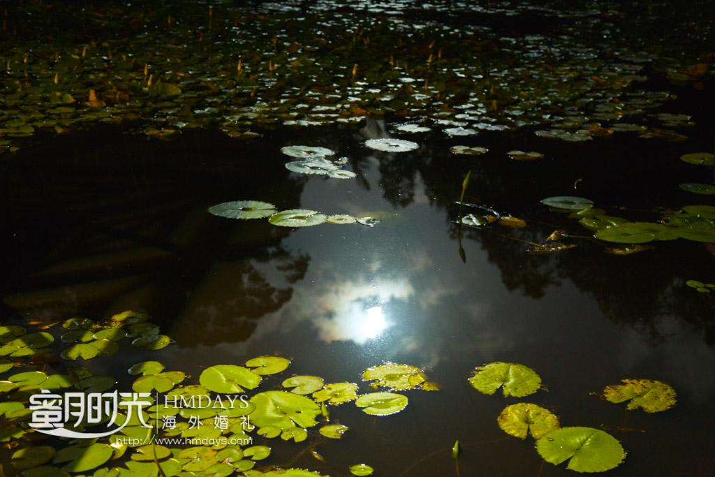 通透的荷塘,池水很干净,偶尔还能看到一两条小鱼在其中游荡而过 澳洲婚礼庄园内景