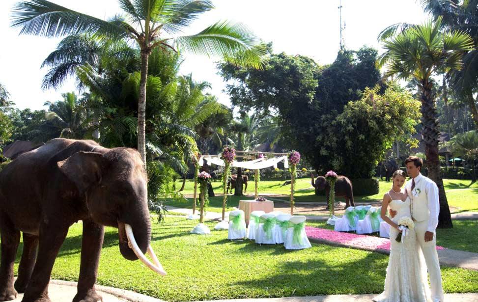 ELEPHANT SAFARI|巴厘岛大象公园婚礼|巴厘岛婚礼|海外婚礼|蜜月时光