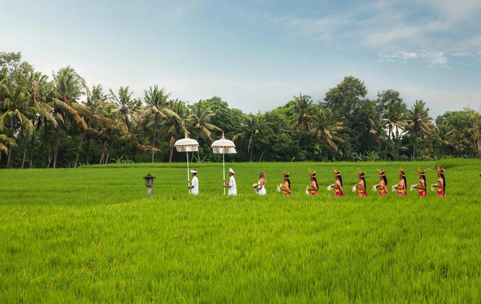 巴厘岛稻田婚礼