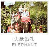 巴厘岛大象公园婚礼照片